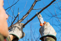 Pruning tree Royalty Free Stock Image