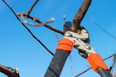 Pruning tree Stock Photos