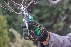 Pruning tree royalty free stock image