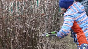 Pruning  tree in the spring. Pruning garden plants in the spring stock video footage