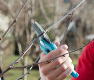 Pruning Trees Royalty Free Stock Image