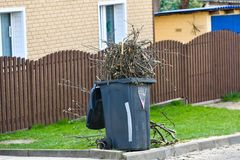Pruning trees. cutting some branches from the tree to the organic compost container royalty free stock photo
