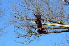Pruning trees using a lift-arm Stock Photography