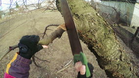 Pruning trees winter stock video footage