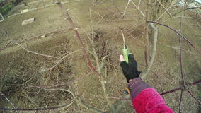 Pruning trees winter stock footage