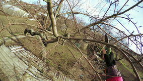 Pruning trees winter stock video