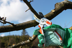 Pruning twigs and branches Stock Photo