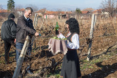 Pruning of the vineyards ritual in Bulgaria Royalty Free Stock Photography