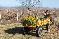 Pruning of the vineyards ritual in Bulgaria Royalty Free Stock Images