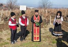 Pruning of the vineyards ritual in Bulgaria Stock Images