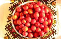Prunus cerasifera Früchte auf gesticktem Tuch Stockfotos