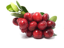 Prunus Cerasus cherry. Prunus plant kingdom Plantae. Cherry is a deciduous fruit trees in northern China after the relay China's first fruit ripening cherry Stock Image