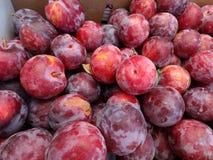 Prunus 'Cherry Pluot' Royalty Free Stock Image