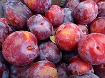 Prunus 'Cherry Pluot' Royalty Free Stock Photography