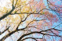 Prunus Stock Photos