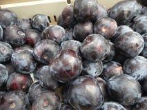 Prunus 'Flavor Heart Pluot' Stock Images