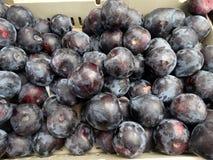 Prunus 'Flavor Heart Pluot' Stock Photos
