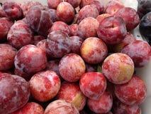 Prunus 'Flavor King Pluot' Stock Photo