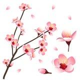 Prunus persica - de Bloesem van de Perzikbloem Vector illustratie Stock Afbeeldingen