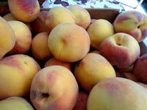 Prunus persica 'Fairtime Yellow' Peach Stock Images