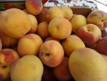 Prunus persica 'Fairtime Yellow' Peach Stock Photo