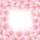 Prunus serrulata - Cherry blossom, Sakura Border isolated on White Background. Vector Illustration.  stock illustration