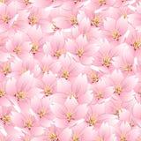 Prunus serrulata - Cherry blossom, Sakura Seamless Background. Vector Illustration.  vector illustration