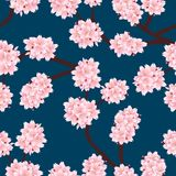 Prunus serrulata Outline - Cherry blossom, Sakura on Indigo Blue Background. Vector Illustration.  royalty free illustration