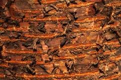 prunus tree bark Stock Photography