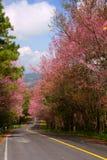 Prunuscerasoidesväg 3 Arkivbilder