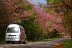 Prunuscerasoidesväg 4 Arkivbild