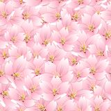 Prunusserrulata - Kersenbloesem, Sakura Seamless Background Vector illustratie Stock Afbeelding