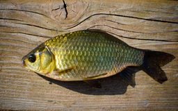 Prussian carp Royalty Free Stock Photography