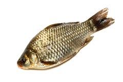 Prussian carp, Silver, Gibel Stock Photo