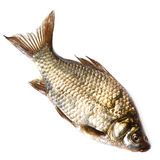 Prussian carp, Silver, Gibel Stock Images