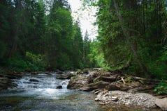 河Prut 库存图片