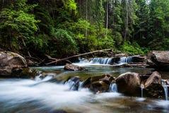 Prut flod Arkivfoton