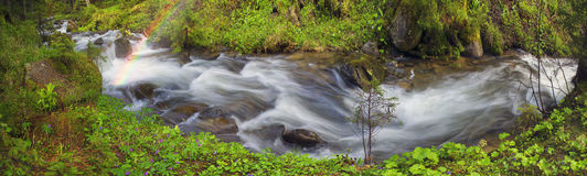 Prut river in the wild forest Stock Photos