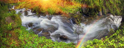 Prut river in the wild forest Royalty Free Stock Photography