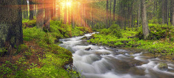 Prut river in the wild forest Royalty Free Stock Photos