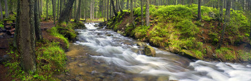 Prut river in the wild forest Royalty Free Stock Images