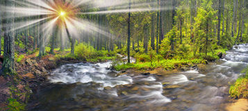 Prut river in the wild forest Stock Images