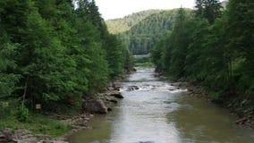 Prut`s mountain river rapids in Eastern Europe Carpathian Mountains, Ukraine stock video