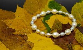 Pryda med pärlor armbandet som isoleras på höstlövverkbakgrund våta leaves royaltyfria foton