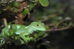 prydd med ädelsten gecko Arkivbild