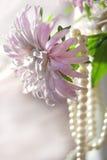 Prydde med pärlor asterrosa färger Arkivfoto