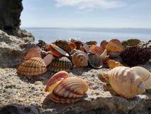 pryder med ädelsten havet royaltyfria foton