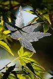 pryder med ädelsten naturen Royaltyfria Bilder