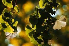 pryder med ädelsten naturen Royaltyfria Foton