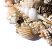 pryder med pärlor snäckskal royaltyfri foto